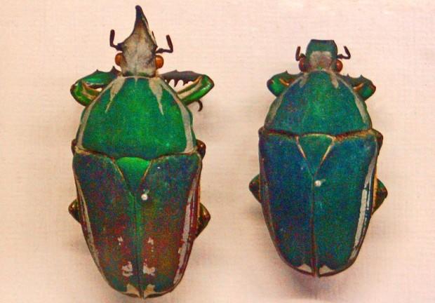 Ученые изСингапура создали жука-киборга надистанционном управлении