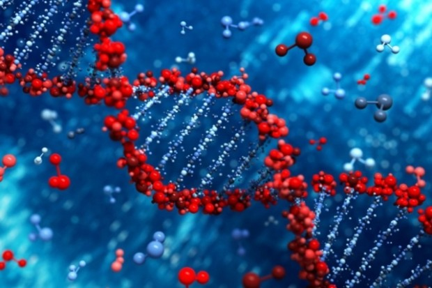 Учёные рассказали, что на хорошую учебу влияют гены