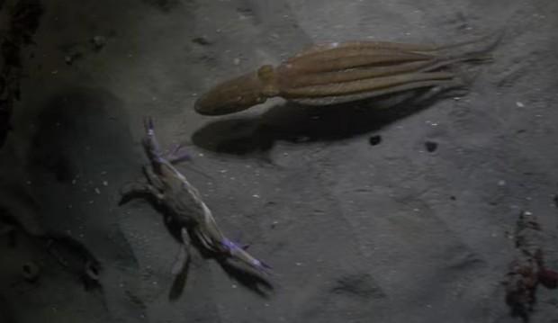 Драйверы засняли навидео неожиданный финал погони осьминога закрабом