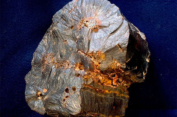 Ученые отыскали самый старинный вмире гриб