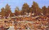 Вырубка леса (Dendrology.ru: Лесная библиотека)