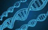 Ученые рассказали, что происходит в клеточных ядрах при развитии рака