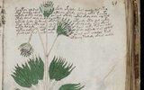 Академик из Бристоля расшифровал легендарный манускрипт Войнича