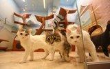Израиль попросил у Кадырова денег для «дворца кошек» Куклачева