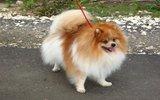 Названа самая популярная порода собак у россиян в 2019 году