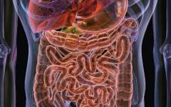 Система пищеварения. Фото с сайта медлаб.рф