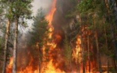 Лесные пожары в Якутии. Фото с сайта 14.mchs.gov.ru