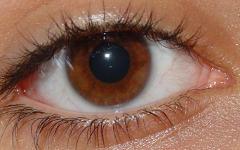 Глаз. Фото с сайта wikipedia.org
