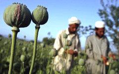 Выращивание героина в Афганистане. Фото с сайта information.dk