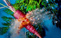 Фиолетовая морковь. Фото Алана Сэйлора с сайта dezinfo.net