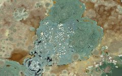 Изображение Bill Bertram с сайта wikimedia.org