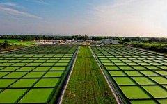 Площади под выращивание водорослей для биодизеля. Фото с сайта nrcki.ru