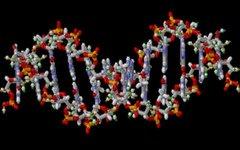 Двойная спираль ДНК. Фото с сайта wikimedia.org