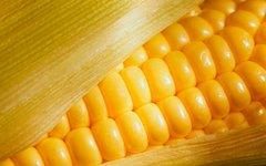 Кукуруза. Фото с сайта zoriane.com