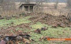 Стоп-кадр с видом заброшенного села
