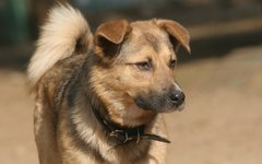 Собака из питомника © KM.RU