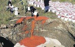 Утилизация красной икры. Фото МВД России по Камчатскому краю с kp.ru