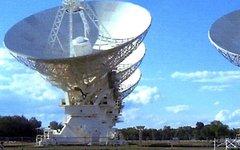 Фото Penelope R. Wild с сайта wikimedia.org