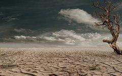 Засуха. Фото с сайта Рixabay.com