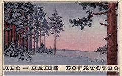 России грозит лесной апокалипсис