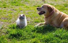 Травы для лечения собак и котов