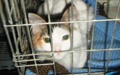 Кошка в клетке. Фото с сайта koshkimira.ru