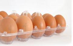 Куриные яйца. Фото с сайта аgro-n.ru