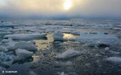 Фото oceana.org