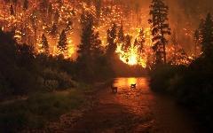 Один из лесных пожаров в США. Фото Джона МакКолгана (John McColgan)