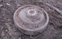 Мина. Фото с сайта zara-bug.by