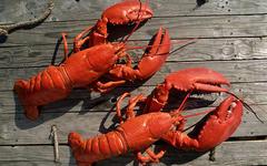 Лобстеры. Фото с сайта lobsteranywhere.com