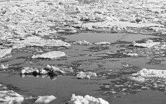 Льды в Арктике © РИА Новости, Фред Гринберг