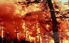 Лесной пожар. Фото с сайта megabook.ru