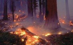 Лесные пожары. Фото с сайта chertovy-kulichki.nnover.ru