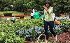 Мишель Обама на грядках. Фото с сайта obamafoodorama.blogspot.com