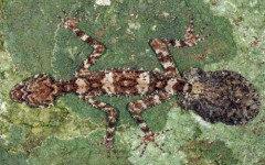 Зоологи нашли в Австралии «затерянный мир» неизвестных животных ...
