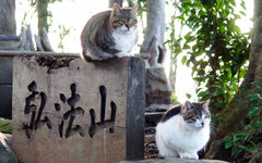 Фото Toshihiro Gamo с сайта flickr.com