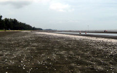 Пляж Can Gio. Фото с сайта wikimedia.org