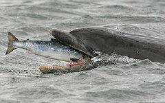 Фото с сайта charlestonfishing.com