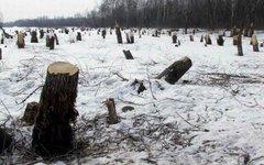Фото с сайта svoisotki.ru