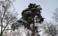 Лес © KM.RU, Дмитрий Хлевнюк