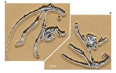 Останки Archicebus achilles. Фото с сайта nature.com