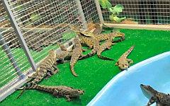 Вольер с крокодилами. Фото с сайта vvcentre.ru