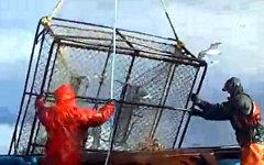 Ловля камчатского краба. Стоп-кадр с видео в YouTube