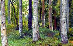 Фрагмент Картины Ивана Шишкина «Лес. Ели»