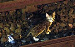 Один из котят на путях метро в Бруклине. Фото пользователя Твиттера @NYCTSubwayS