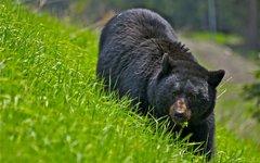 Фото с сайта bearworld.ru
