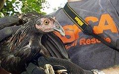 Фото с сайта aspca.org