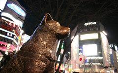 Памятник Хатико в Сибуйе. Фото пользователя Flickr Dominiek ter Heide