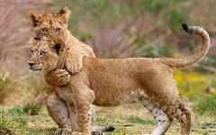 Фото с сайта lionsworld.narod.ru